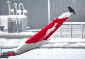 Ein Vogel auf dem Winglet einer A330.